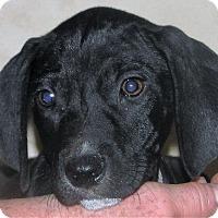 Adopt A Pet :: Matthew - Columbus, IN