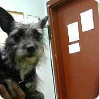 Adopt A Pet :: MOLLY - Atlanta, GA