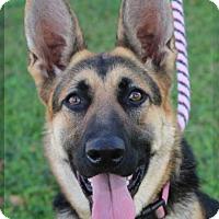 Adopt A Pet :: HARPER - Red Bluff, CA