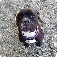 Adopt A Pet :: Belle- Ohio - Fulton, MO