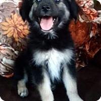 Adopt A Pet :: Borris - Buena Park, CA