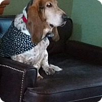Adopt A Pet :: Chowder - Barrington, IL