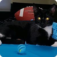Adopt A Pet :: Warren Harding - Albemarle, NC