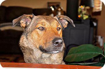 German Shepherd Dog/Blue Heeler Mix Dog for adoption in Baltimore, Maryland - Jinx (COURTESY POST)