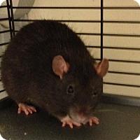 Adopt A Pet :: Noodles - Navarre, FL