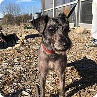 Adopt A Pet :: Maverick - Estherville, IA