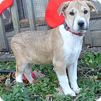 Adopt A Pet :: Prancer - Bedminster, NJ