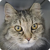 Adopt A Pet :: Momma - Fairport, NY