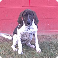 Adopt A Pet :: Ellie - Sparta, NJ