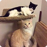 Adopt A Pet :: Jellybean - Houston, TX