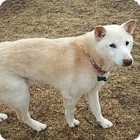 Adopt A Pet :: Aurora - Aurora, IL