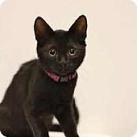 Adopt A Pet :: Icarus - Sacramento, CA