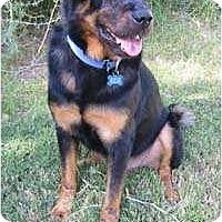 Adopt A Pet :: Buddah - Gilbert, AZ