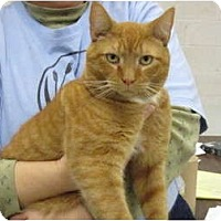 Adopt A Pet :: Darwin - Warminster, PA