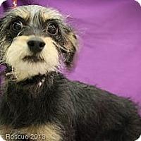 Adopt A Pet :: Jasper - Broomfield, CO