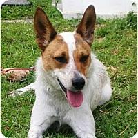 Adopt A Pet :: Lexie in Houston - Houston, TX