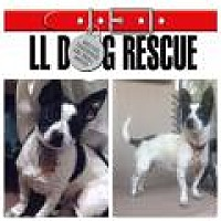 Adopt A Pet :: Rocky - Shawnee Mission, KS