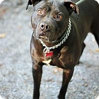 Adopt A Pet :: Mugsy - Tinton Falls, NJ
