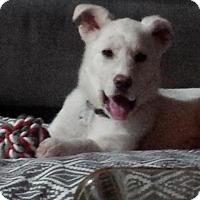 Adopt A Pet :: Snow White - Saskatoon, SK