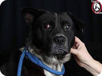 Labrador Retriever Mix Dog for adoption in Millersville, Maryland - Dozer