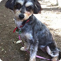 Adopt A Pet :: Pippa - San Antonio, TX