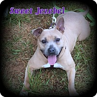 Adopt A Pet :: Jezebel - Denver, NC
