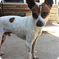 Adopt A Pet :: Marquis - Encino, CA