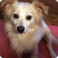 Adopt A Pet :: Max - Ball Ground, GA