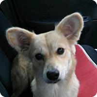 Adopt A Pet :: Naomi Adoption pending - Manchester, CT