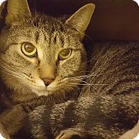 Adopt A Pet :: Bart - Bensalem, PA