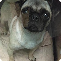Adopt A Pet :: Alice - Gardena, CA