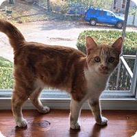 Adopt A Pet :: Miller - Danbury, CT