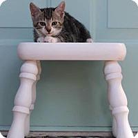 Adopt A Pet :: Evee - Leesburg, FL