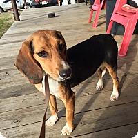 Adopt A Pet :: Hazel - WAGONER, OK