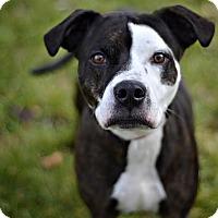 Adopt A Pet :: Morrigan - Midland, MI
