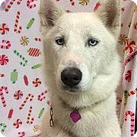 Adopt A Pet :: I1265656 - Pomona, CA