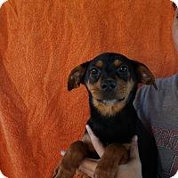 Adopt A Pet :: Kiley - Oviedo, FL
