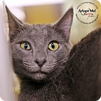 Adopt A Pet :: Connie - Lyons, NY