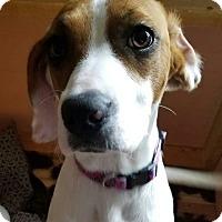 Adopt A Pet :: Addie - Homer, NY