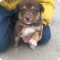 Adopt A Pet :: Izzy & samson - mooresville, IN