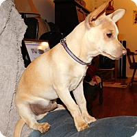 Adopt A Pet :: Tater Tot - Von Ormy, TX