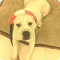 Adopt A Pet :: Izzy - Warren, MI