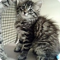 Adopt A Pet :: Mercy - San Fernando Valley, CA