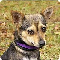 Adopt A Pet :: Daisy Mae - Mocksville, NC
