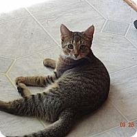 Adopt A Pet :: Tiny - Saint Albans, WV