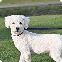 Adopt A Pet :: Duncan - Tumwater, WA