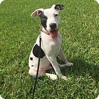 Adopt A Pet :: Dunkin - Green Cove Springs, FL
