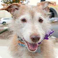 Adopt A Pet :: Pogo - Rockaway, NJ