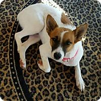 Adopt A Pet :: Cleo - Mentor, OH