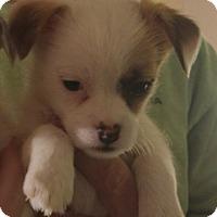 Adopt A Pet :: Bounce - PENDING - Grafton, WI
